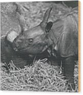 Basel World-record In Rhinoceros Breeding Wood Print