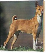 Basenji Dog Wood Print