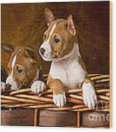 Basenji Puppies Wood Print by Marvin Blaine