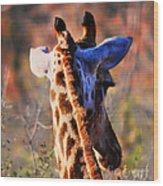 Bashful Giraffe  Wood Print by Alexandra Jordankova