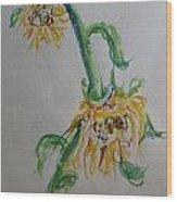 Bashful Sunflower Wood Print