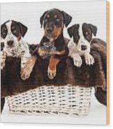 Basket Of Rottweiler Mixed Breed Puppies Wood Print