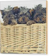 Basket Of Yorkies Wood Print