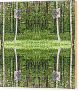 Basketball Forest Court Reflection 1 Wood Print