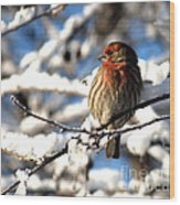 Basking In Winter Light Wood Print