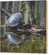 Basking Turtle Wood Print