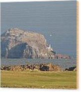 Bass Rock Scotland Wood Print