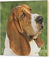 Basset Hound Dog Wood Print