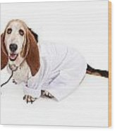 Basset Hound Dressed As A Veterinarian Wood Print