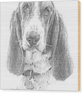 Basset Hound Pencil Portrait Wood Print