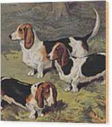 Basset Hounds Wood Print by English School