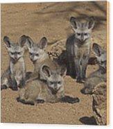 Bat-eared Fox Pups Wood Print
