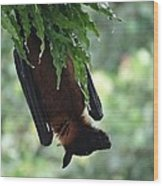Bat In The Rain Wood Print