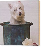 Bath Time Westie Wood Print
