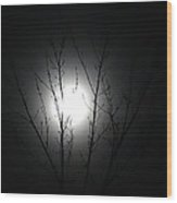 Bathed In Moonlight Wood Print