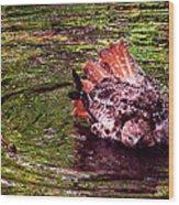 Bathing Red Tailed Hawk Wood Print