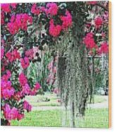 Baton Rouge Louisiana Crepe Myrtle And Moss At Capitol Park Wood Print