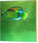 Battery Operated Fish Wood Print