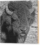 Battle Worn Bull Wood Print