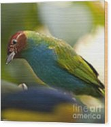 Bay-headed Tanager - Tangara Gyrola Wood Print