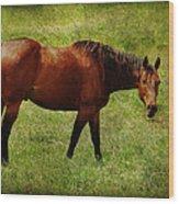Bay Horse Wood Print