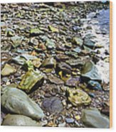 Bay Of Fundy Shoreline Wood Print