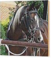 Bay Pinto Amish Buggy Horse Wood Print