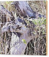 Bayberry And Driftwood Wood Print