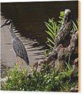 Bayou Bird Wood Print