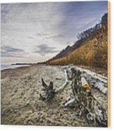 Beach At Scarborough Bluffs Wood Print by Elena Elisseeva