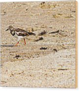 Beach Bird 2 Wood Print