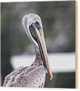Beach Bum - Pelican Wood Print