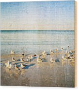 Beach Combers - Seagull Art By Sharon Cummings Wood Print