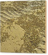 Beach Desertscape Wood Print