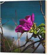 Beach Flower Wood Print