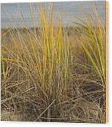 Beach Grass Wood Print