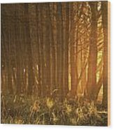 Beach Light Through The Trees Wood Print