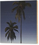 Beach Palms Wood Print