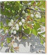 Beach Plum - Prunus Maritima - Island Beach State Park Nj Wood Print