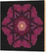Beach Rose I Flower Mandala Wood Print by David J Bookbinder