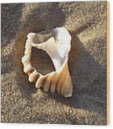 Beach Shell Wood Print by David Yack