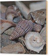 Beach Shells 3 Wood Print