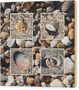 Beach Shells And Rocks Collage Wood Print