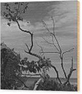 beach tree BW Wood Print
