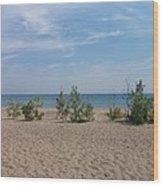 Beach Trees Wood Print