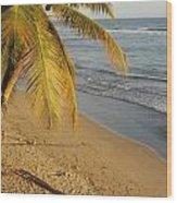Beach Under Golden Palm Wood Print