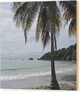 Beach With Palm Tree Wood Print