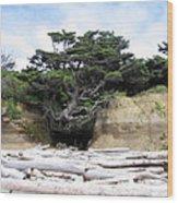Beachtree Wood Print