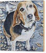 Beagle In Autumn Wood Print