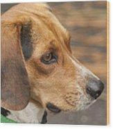Beagle Loyalty Wood Print